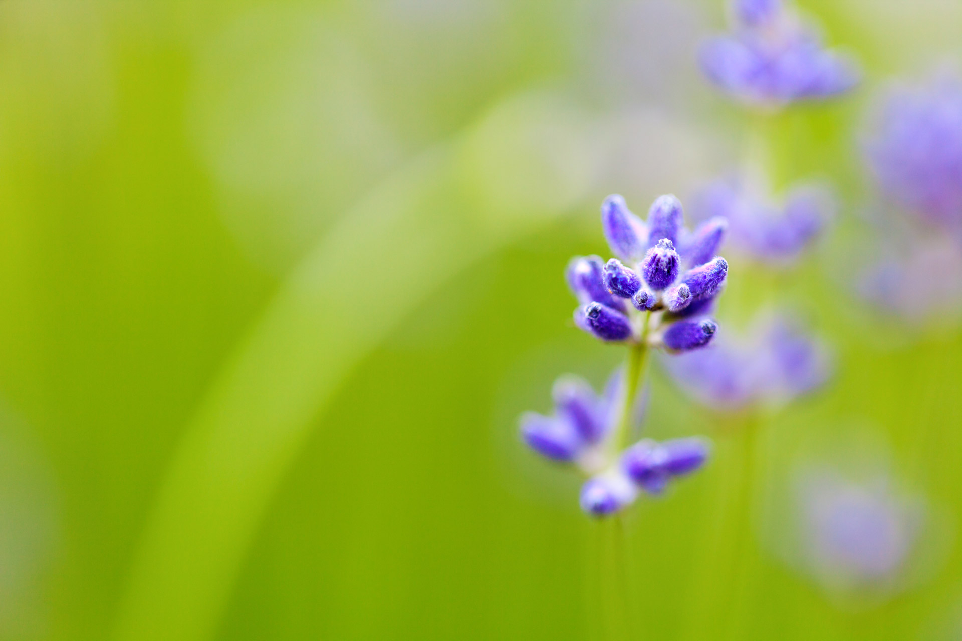 flower_and_shallow_depth_of_field(PhotoCredit Courtney)
