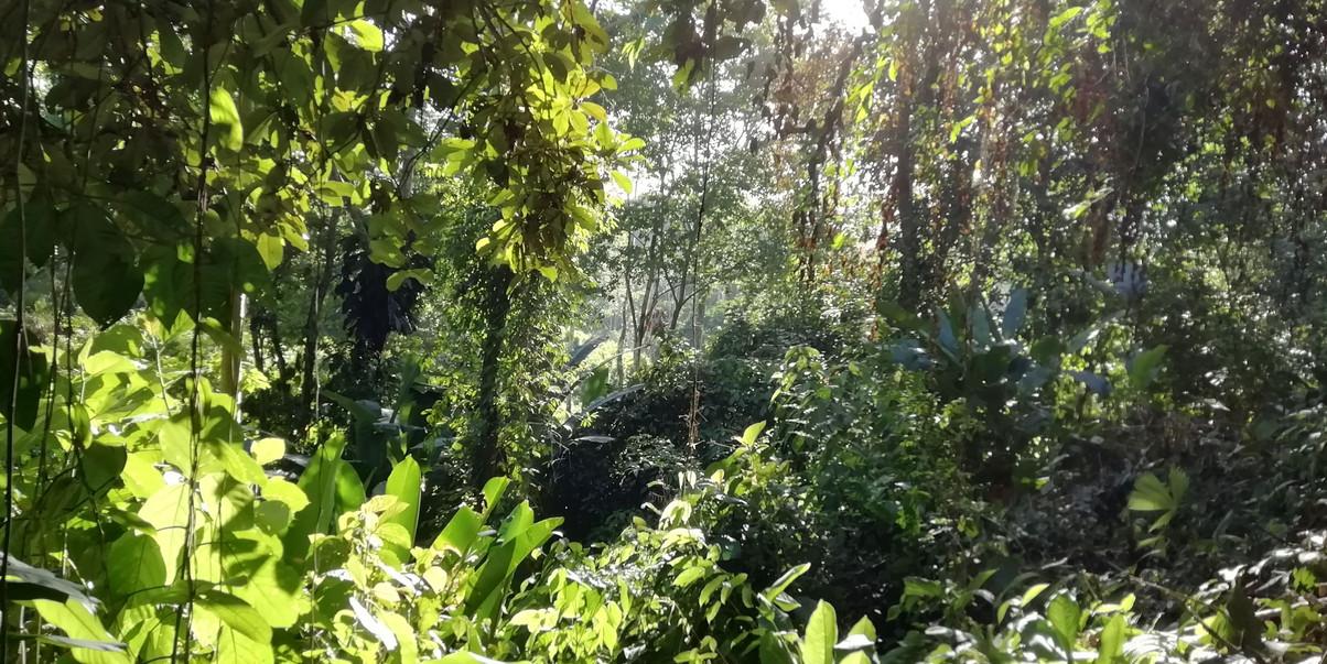 Our private jungle reserve