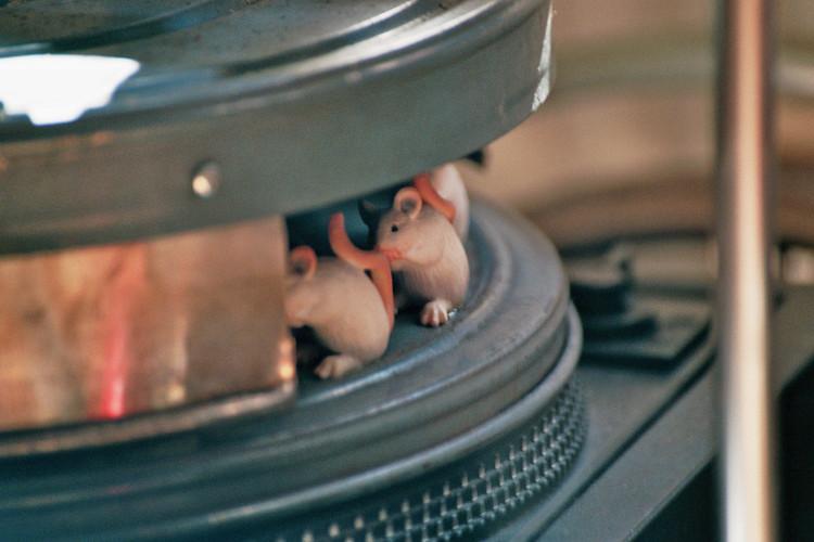 Mäusekönige.jpg