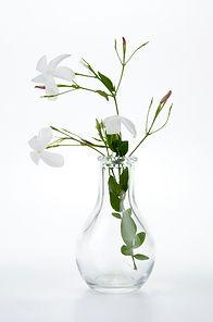Jasmine in glass vase.jpg