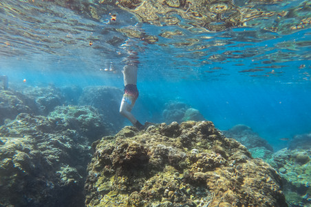 coral-3.jpg