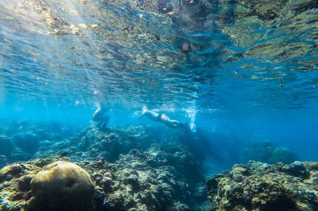 coral-4.jpg