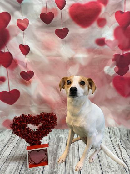 Sammi Valentine's Day 2020