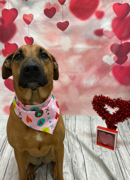 Charlie Valentine's Day 2020