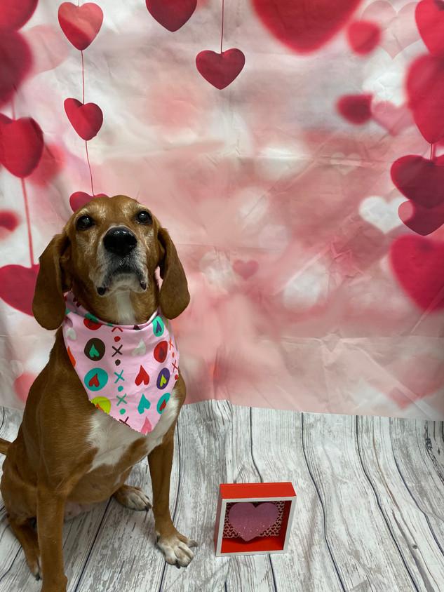 Maddie Valentine's Day 2020