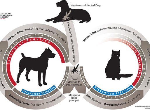 April Pet Health Awareness!