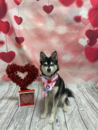 Kenai Valentine's Day 2020