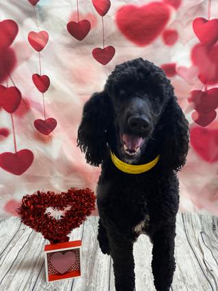 Shelby Valentine's Day 2020