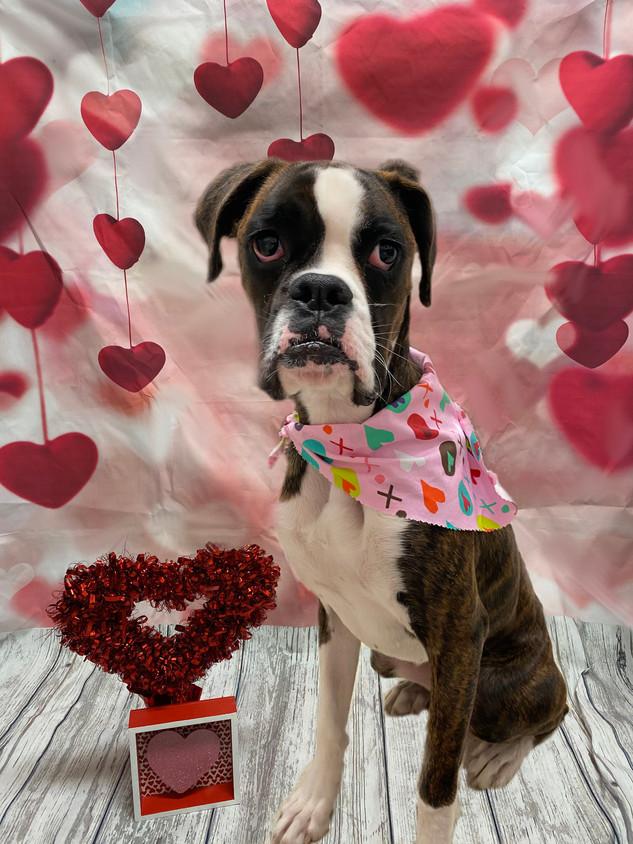 Marley Valentine's Day 2020