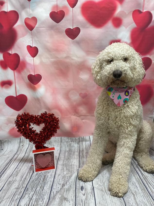 Dodger Valentine's Day 2020