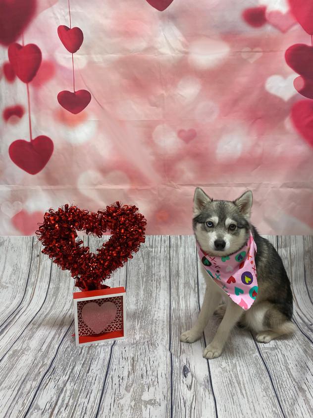 Kodiak Valentine's Day 2020