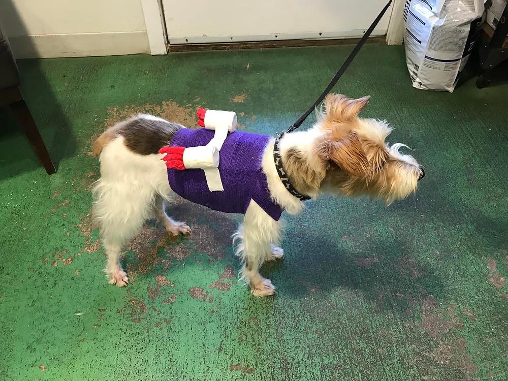"Dog wears back brace with homemade ""rockets"" made of cardboard"