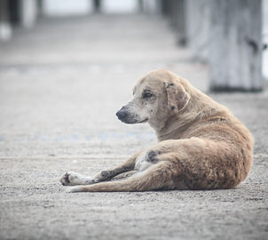 dog-1068275_1920.jpg