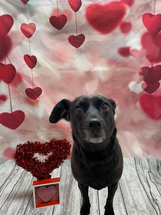 Olive Valentine's Day 2020