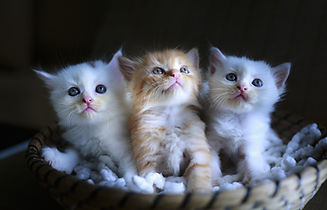 cat-3266675_1920.jpg