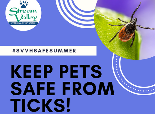 Summer Pet Safety: Tick Prevention