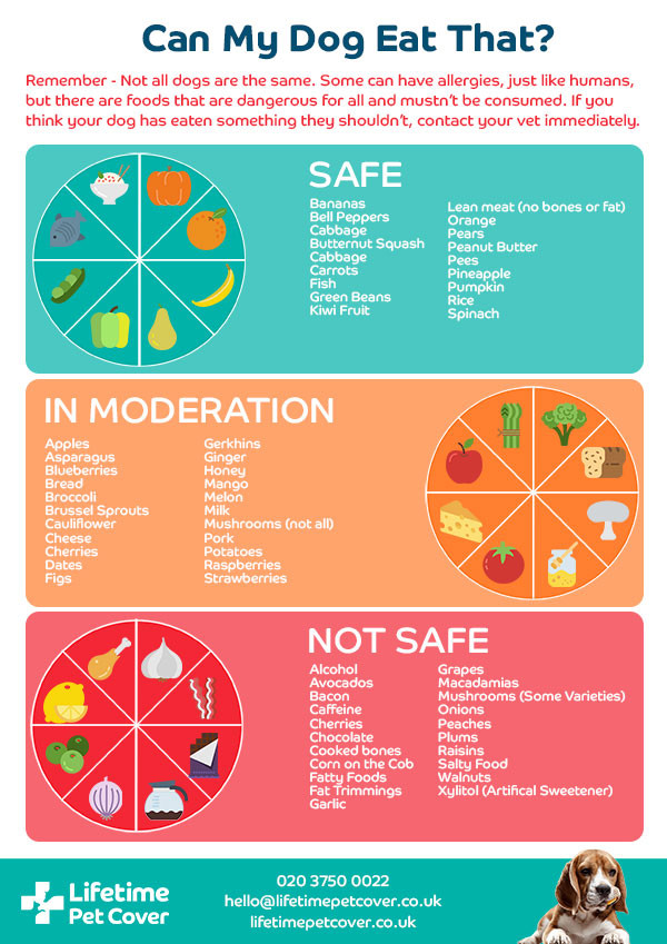 Safe_and_not_safe_food_infographic_2_1.j