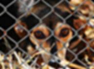 animal-welfare-1116215_1920.jpg