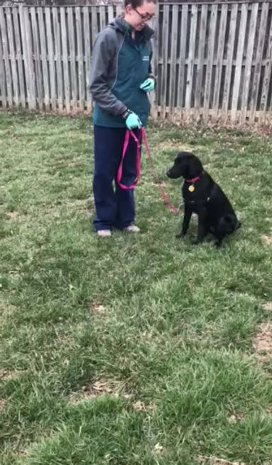 Abby's Training with Ripley