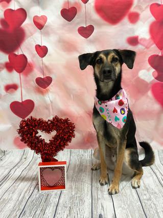 Ryder Valentine's Day 2020