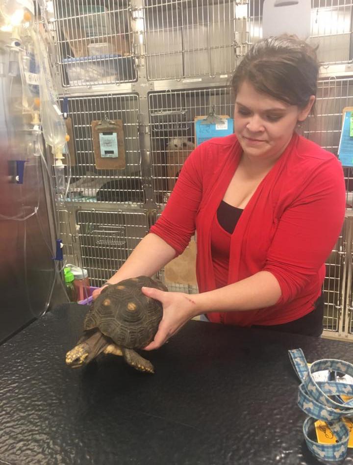 Kelsey Turtle.jpg