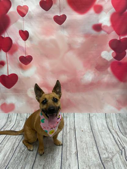 Izzy Valentine's Day 2020