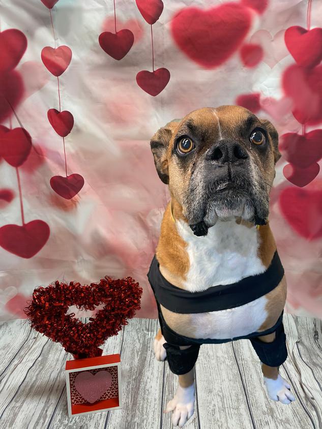 Bear Valentine's Day 2020