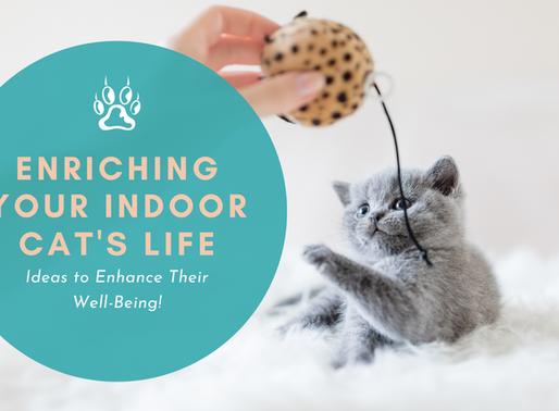 Enriching Your Indoor Cat's Life
