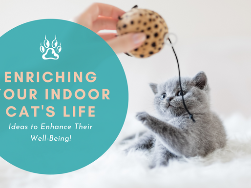 Enriching Your Indoor Cat's Life