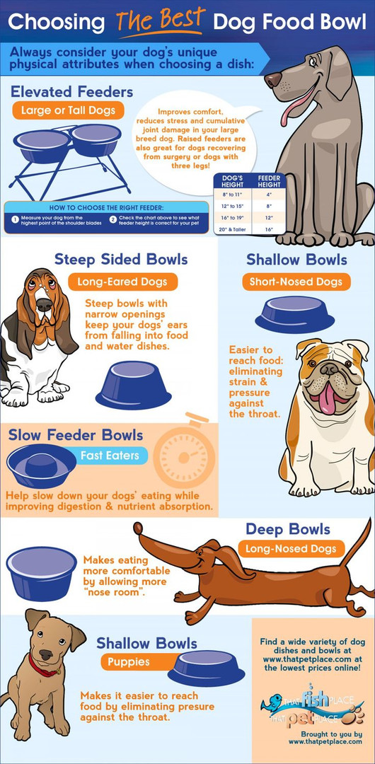 choose-best-food-bowl-for-dogs.jpg