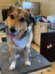 cute pup.JPG