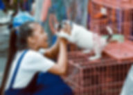 animal-blur-cage-757455.jpg