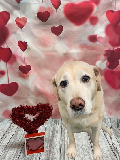 Sandy Valentine's Day 2020