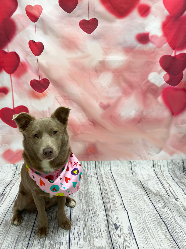 Jeter Valentine's Day 2020