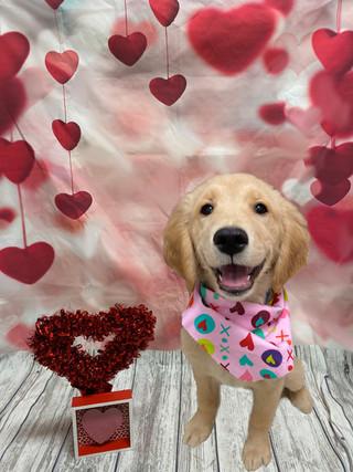 Destiny Valentine's Day 2020