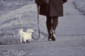 woman-3218052_1920.jpg