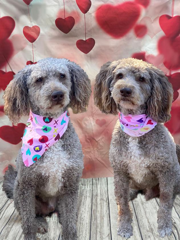 Cooper and Winston Valentine's Day 2020