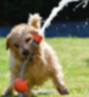 dog-1310545_1920.jpg
