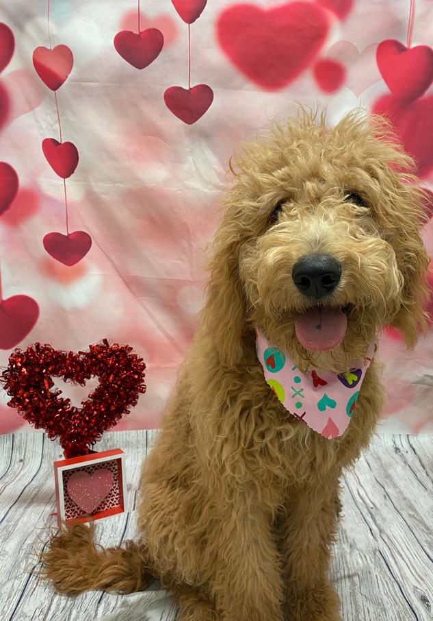 Tango Valentine's Day 2020