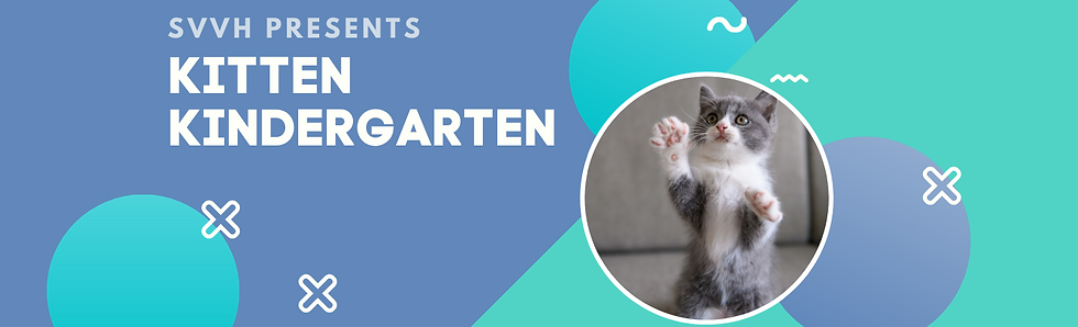 Copy of kitten kindergarten-2.png