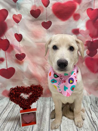 Jasper Valentine's Day 2020