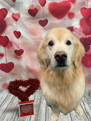 Chester Valentine's Day 2020
