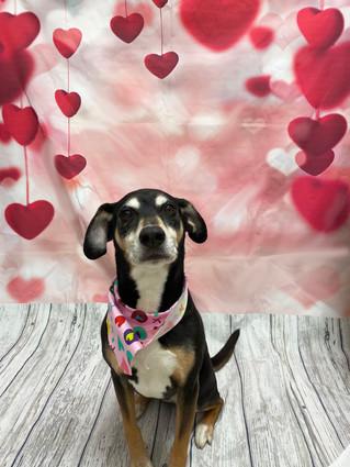 Mika Valentine's Day 2020