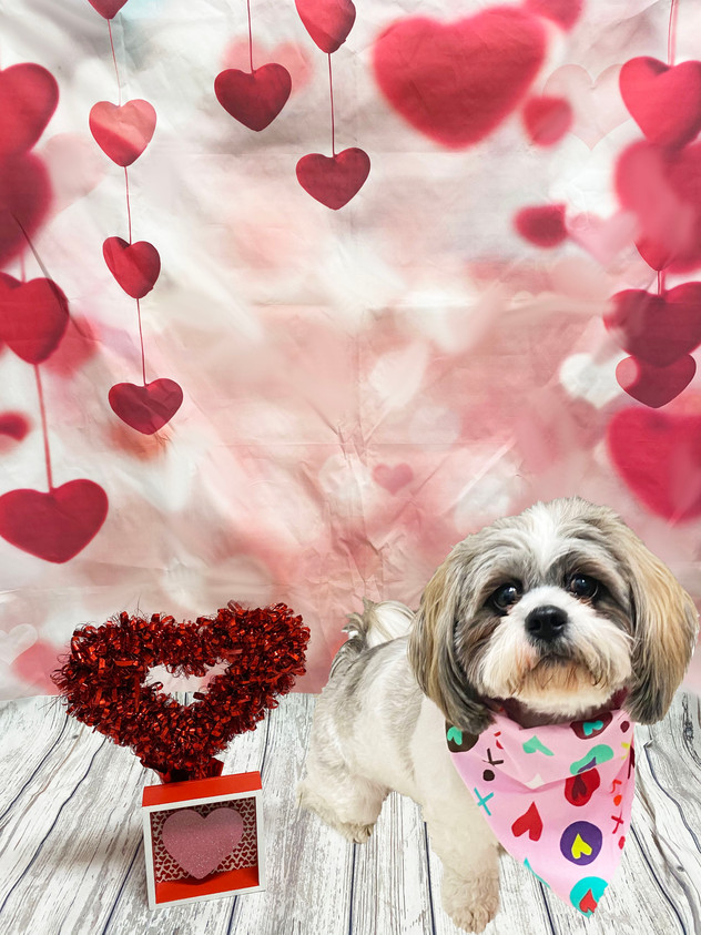 Mia Valentine's Day 2020