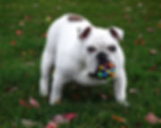dog-715531_1920.jpg