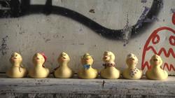 Where Are the Ducks?