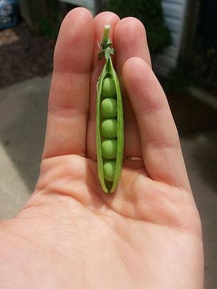 peas in a pod.jpg