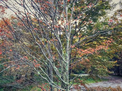 Catskill Fall 🌲🌿🌱🍃🌾🍂🍁