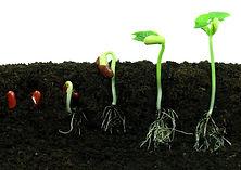 bean-seeds_shutterstock_57850783.jpg