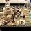 Thumbnail: Nordsee Gruß - groß